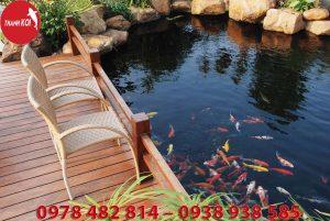 Công ty thiết kế hồ cá koi chuyên nghiệp uy tín tại Tphcm