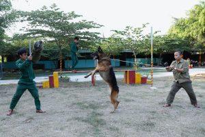 Top những giống chó nghiệp vụ dũng mãnh nhất hiện nay